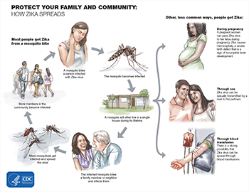 zika-transmission-infographic